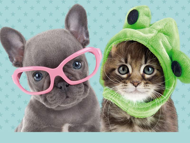 Studio Pets nueva colección